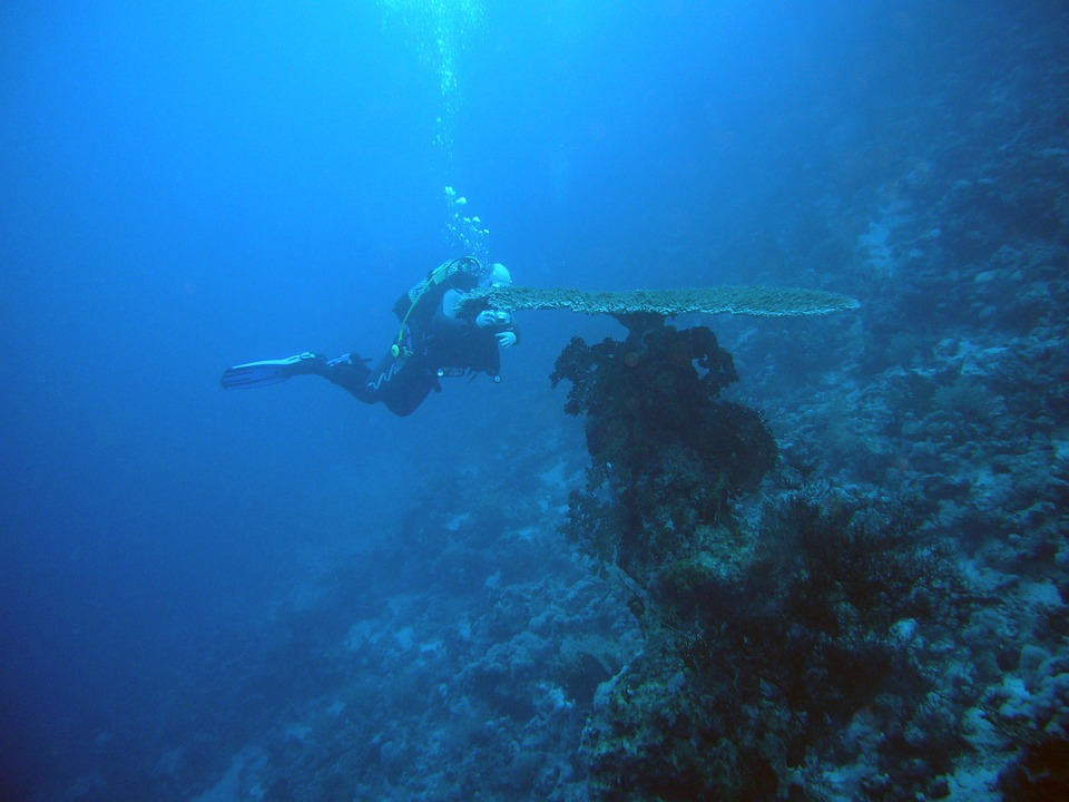 diver inspecting a large coral formation